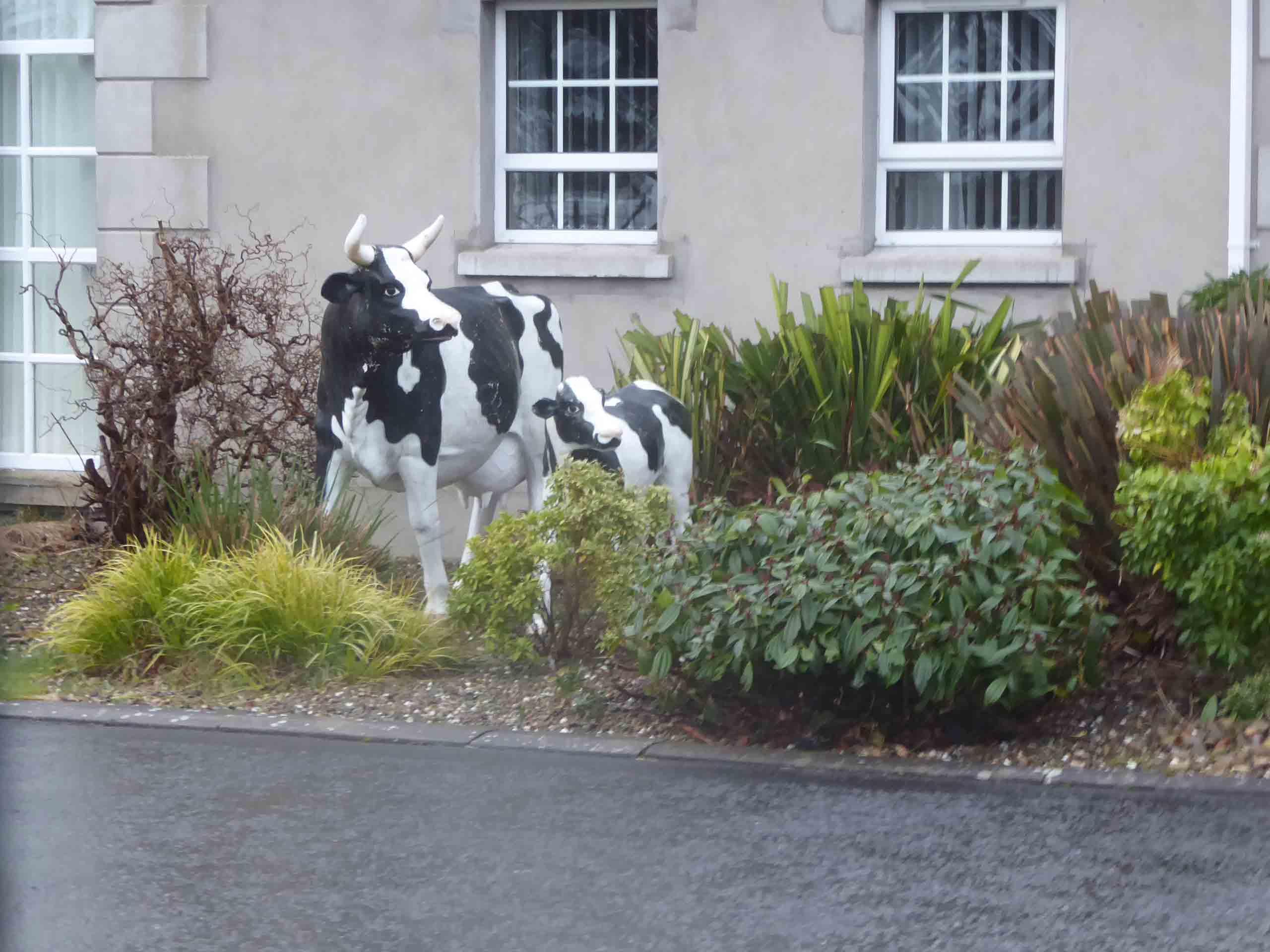 TQ14-Cows